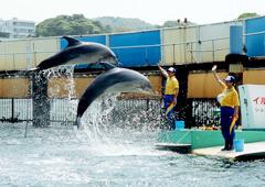 イルカ島 イルカショー,東海,おすすめ,水族館