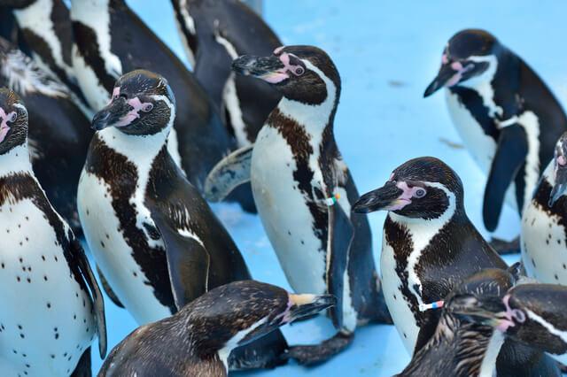 フンボルトペンギン,東海,おすすめ,水族館