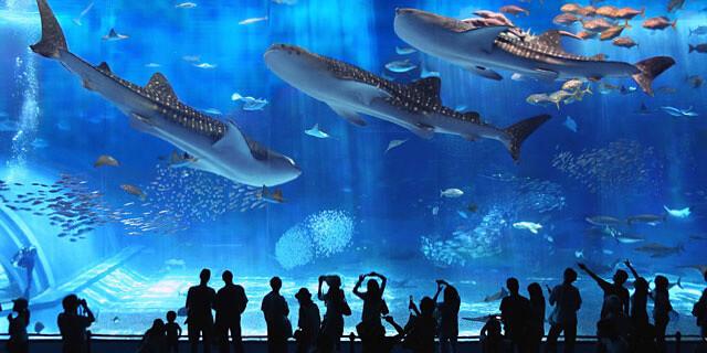 沖縄美ら海水族館,美ら海,水族館,体験