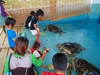 久米島ウミガメ館,美ら海,水族館,体験
