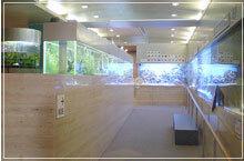 熱帯環境植物館のミニ水族館,関東,水族館,おすすめ