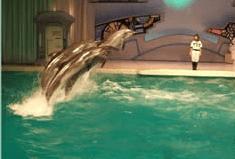 パフォーマンス,油壺マリンパーク,かわうそ,水族館