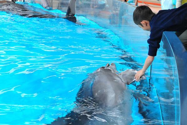 新江ノ島水族館でイルカと握手,新江ノ島,水族館,おすすめ