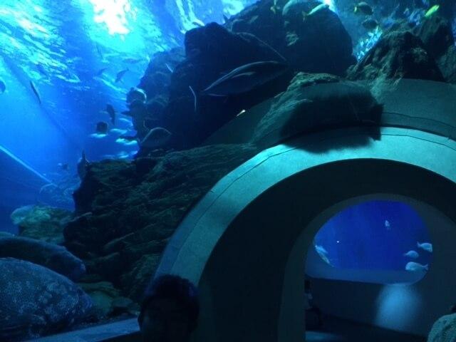 水槽のトンネルで魚を見上げる!,水族館,うみたまご,
