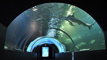 串本海中公園水族館,関西,水族館,おすすめ