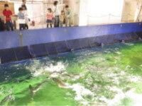 京都大学白浜水族館のイベント,関西,水族館,おすすめ