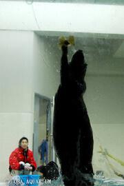 ラッコのイカミミジャンプ,三重,鳥羽水族館,