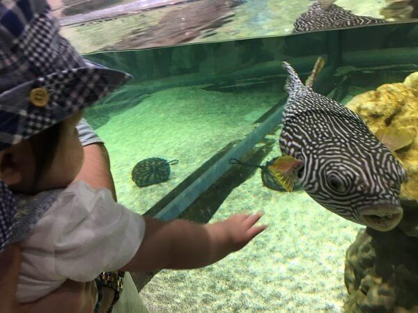 フグを見る赤ちゃん,三重,鳥羽水族館,