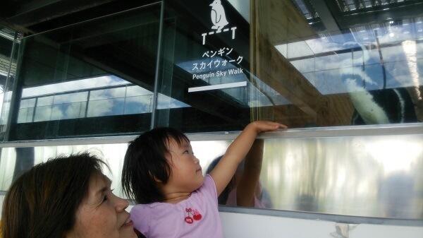 ガラスに触る幼児,三重,鳥羽水族館,