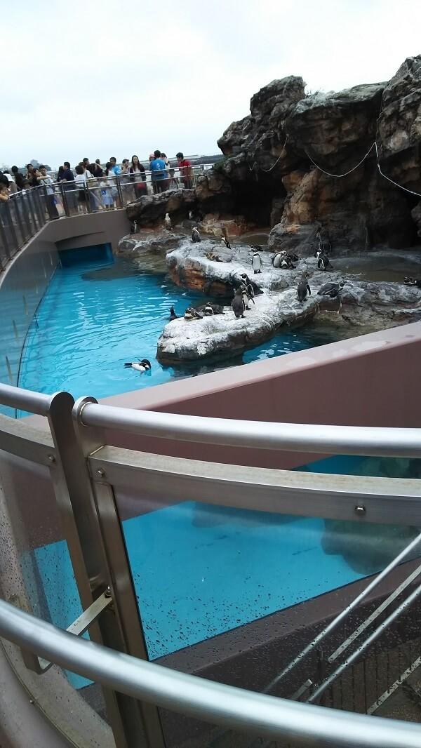 ペンギンのプール,水族館,大洗,