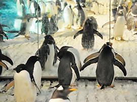 ペンギン,名古屋港水族館,イルカ,