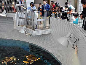 ウミガメのフィーディングタイム,名古屋港水族館,イルカ,