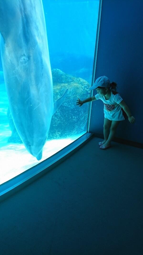 青い光の中の子ども,名古屋港水族館,イルカ,