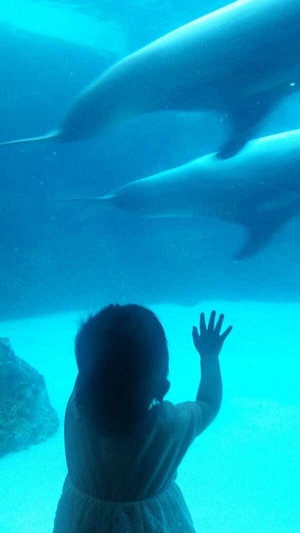 水槽を触る女の子,名古屋港水族館,イルカ,