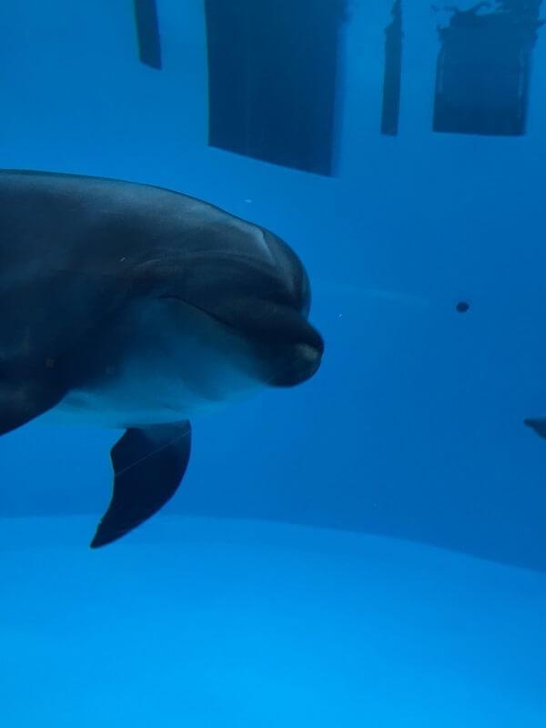イルカの横顔,名古屋港水族館,イルカ,