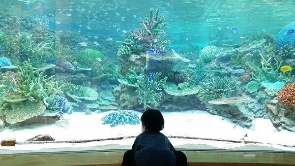 水槽を見ている子ども,名古屋港水族館,イルカ,