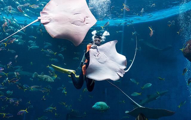 サンゴ礁の魚のフィーディングタイム,千葉,鴨川シーワールド,
