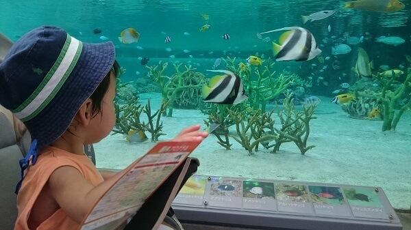 熱帯魚を見る赤ちゃん,千葉,鴨川シーワールド,