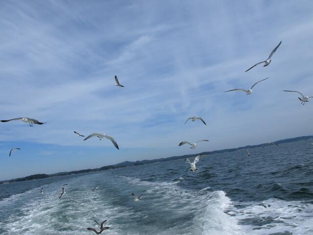 船を追いかけるカモメ,鳥羽,イルカ島,