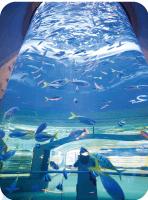 マリンワールドの吹き抜け水槽,マリンワールド,海の中道,