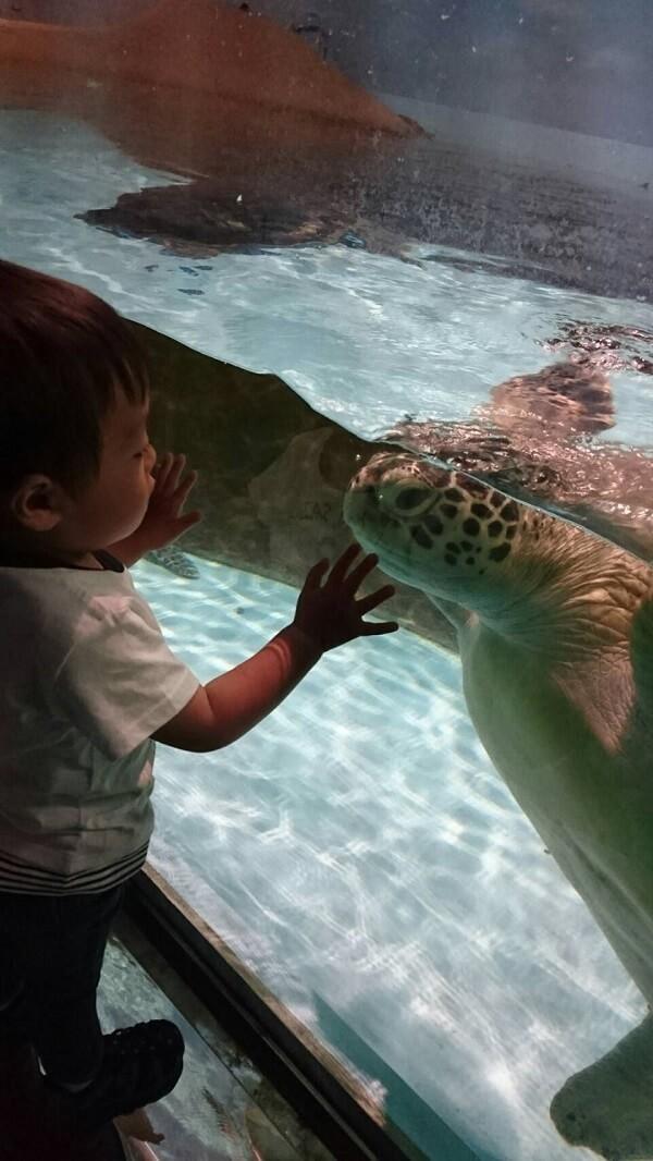 亀を見つめる子ども,マリンワールド,海の中道,