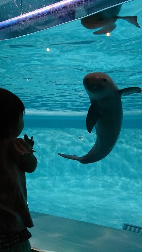 イルカと目が合う子ども,マリンワールド,海の中道,