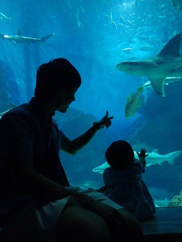 水槽を指さす親子,マリンワールド,海の中道,