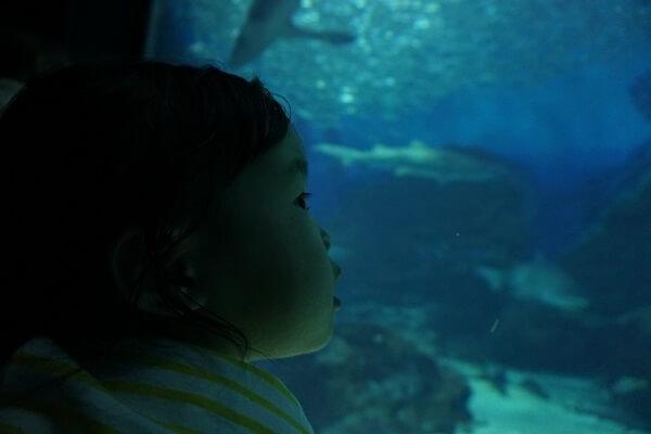 真剣に水槽を見つめる幼児,マリンワールド,海の中道,