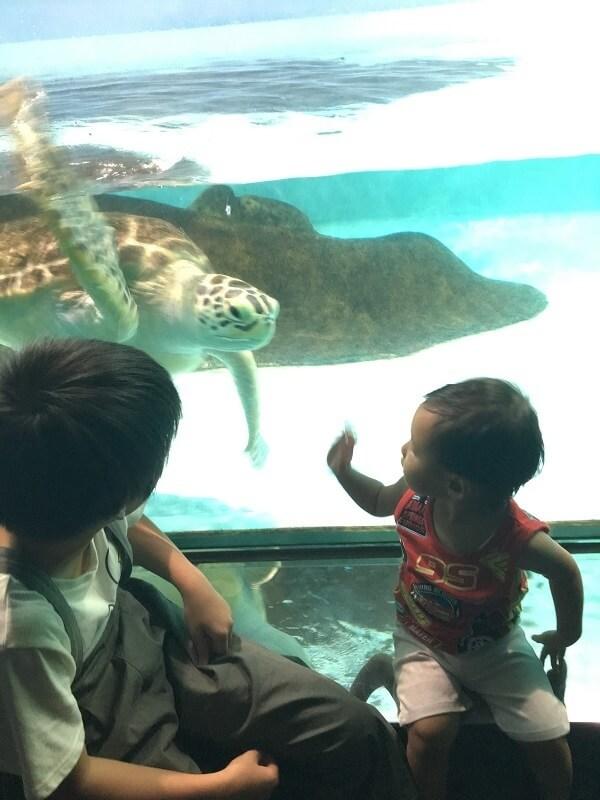 亀に手を振る幼児,マリンワールド,海の中道,