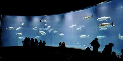 葛西臨海水族園(公益財団法人東京動物園協会),水族館,東京,