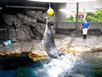 ゴマフアザラシショー,水族館,東京,