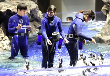 マゼランペンギンの屋内水槽,水族館,東京,