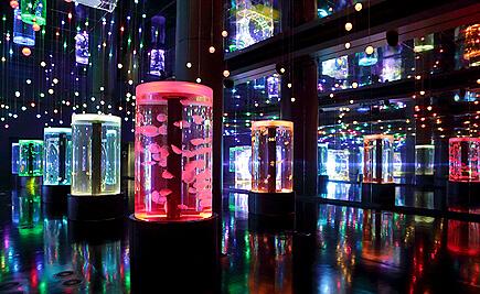クラゲの展示ブース,水族館,東京,