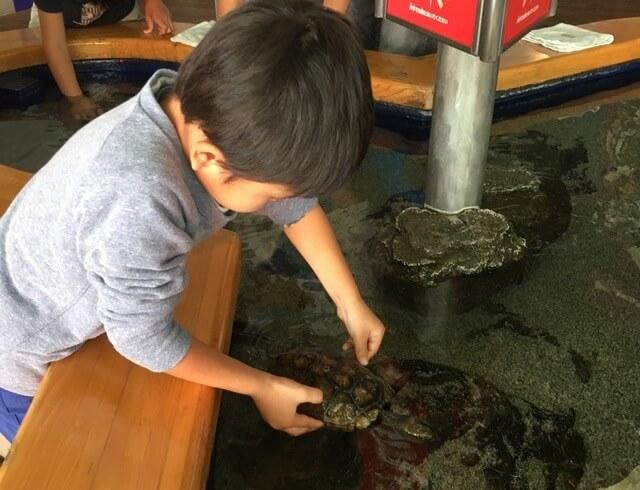 タッチング水槽,栃木県,なかがわ,水遊園