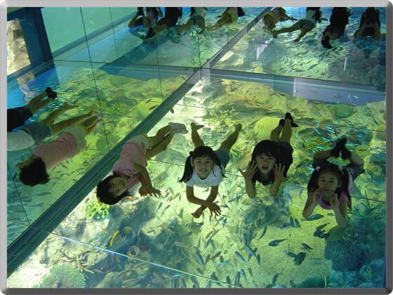 越前松島水族館の室内,越前松島水族館,