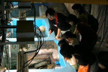 碧南海浜水族館バックヤードツアー,碧南,水族館,