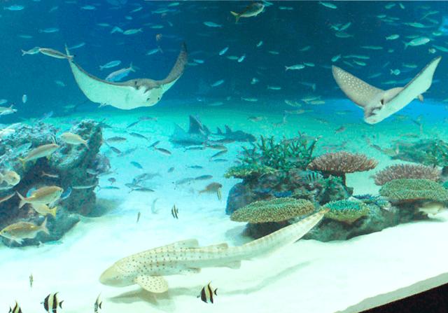 サンシャインラグーン,サンシャイン水族館,料金,