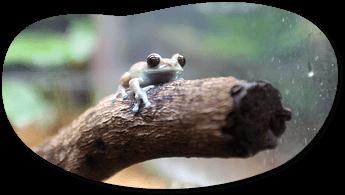 カエル館のカエル,あわしまマリンパーク,割引,