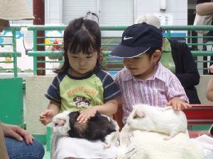 板橋区立こども動物園のモルモットのだっこ,遊園地,東京,