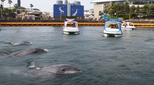 横浜のテーマパーク八景島シーパラダイスの画像,横浜,テーマパーク,遊園地