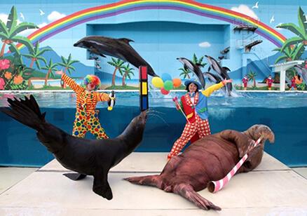 海の動物たちのショーWA,八景島シーパラダイス,ショー,子ども