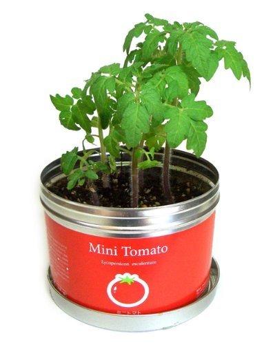 ナガクラ リトルガーデン・プロ ミニトマト LGP-01,家庭,野菜,栽培