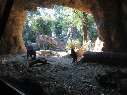 上野動物園のゴリラ,上野動物園,