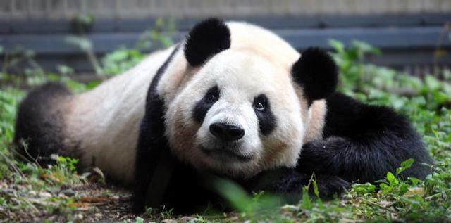 上野動物園のパンダ,関東,動物園,