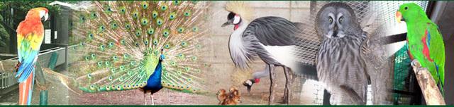 羽村市動物公園,関東,動物園,