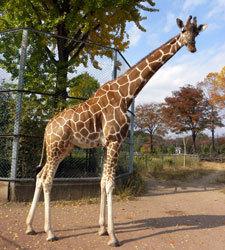 埼玉県こども動物自然公園 キリン,関東,動物園,