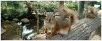 井の頭自然文化園,関東,動物園,