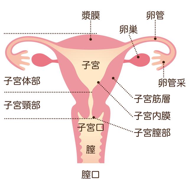子宮のイラスト,出産,子宮口,