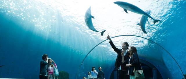 横浜・八景島シーパラダイスのドルフィンファンタジー,水族館,神奈川県,おすすめ