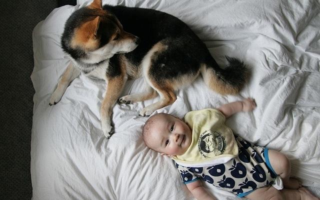 赤ちゃんと寝る犬,